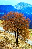 Yellow tree on a sunny day in Himalayas