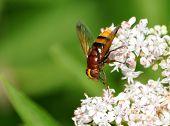 bee on blooming plants