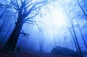 Cool Mood In A Foggy Wood