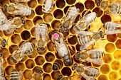 foto of working animal  - a circle of bees with bee - JPG