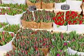 Colorful tulips on sale