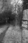 Tams Wood