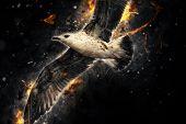 Seagull In Flight. Artistic Grunge Fury Effect