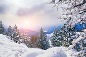 pic of snow forest  - Snow covered trees in the mountains at sunset - JPG