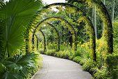 Botanical Garden Path