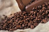 picture of coffee crop  - Vintage manual coffee grinder with coffee beans isolated - JPG