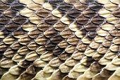 Skin Of The Eastern Diamondback Rattlesnake