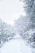 Snowy Shape