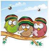 jamaican owl group cartoon