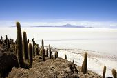 Incahuasi Island in the Salar de Uyuni, Bolivia