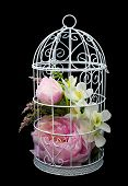 Beautiful lilac flowers in decorative cell