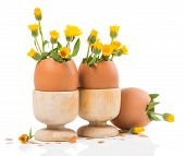 Eggs With Spring Flowers In Wood Eggcups