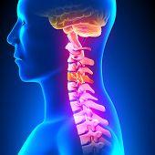 C4 Disc - Cervical Spine