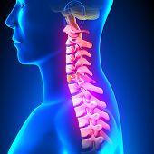 C6 Disc - Cervical Spine