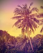 Vintage Faded Nature Background, Palms At Sunset.