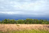 stock photo of tallgrass  - Tallgrass prairie remnant at the Kankakee Sands Nature Reserve under a dramatic sky in early spring - JPG