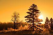 Morning sun in winter time