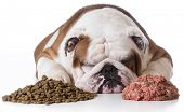 foto of bulldog  - dog laying between pile of kibble and raw dog food on white background  - JPG