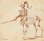 An Hand Drawn Vector: Centaur