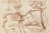 An Hand Drawn Vector: Unicorn