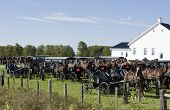 stock photo of mennonite  - horse and buggies parking on the lawn - JPG