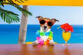 pic of dog birthday  - funny cool dog drinking cocktails at the bar in a beach club party with ocean view on summer vacation holidays - JPG