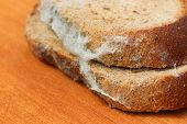 foto of spores  - The old black mold on the bread - JPG