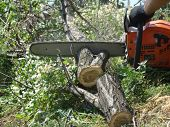 foto of chainsaw  - sawing wood with a chainsaw - JPG