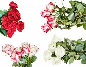 pic of bunch roses  - set of various rose bunches of flowers isolated on white background - JPG