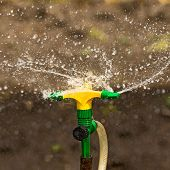 image of sprinkler  - Plastic Home Gardening Irrigation Sprinkler in Operation on Cultivated Agricultural Garden - JPG
