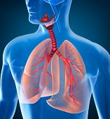 picture of bronchus  - Anatomy of human respiratory system over dark - JPG