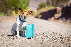 foto of sabbatical  - jack russell dog abandoned and left all alone on the road or street with luggage bag or suitcase begging to come home to owners - JPG