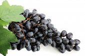 pic of grape-vine  - Wine composition - JPG