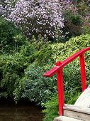 pic of japanese magnolia  - end of red bridge railing and portion of curved bridge - JPG