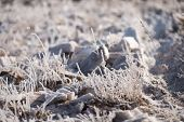 Grass In The Frost, Morning Frost, Baykal poster