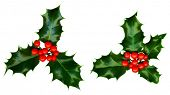 Clipping path. 2 sprigs of holly isolated on a white background