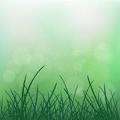 Nature Grass On Blur Green Bokeh Background. Natural Blurred Spring Or Summer Abstract Flora Plant D poster