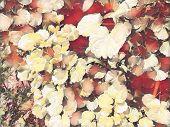 Tropical Foliage Plant In Sunny Garden. Summer Foliage Romantic Digital Illustration. Natural Leaf O poster