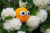 Yellow Smiley Among Flowers