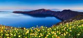 Wildflowers on Santorini
