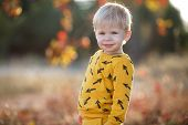 Toddler Outdoors Alone In The Park In Autumn.happy Kid Boy Walking In The Park. Sunny Autumn Day. Bo poster