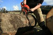 man cuts a fallen tree into logs