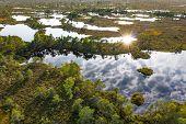 Sunset In The Bog, Golden Marsh, Lakes And Nature Environment. Sundown Evening Light In Summer poster