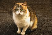 Cute And Fluffy Stray Tricolor Cat With Green Eyes On The Street. Abandoned Lonely Cat On The Street poster