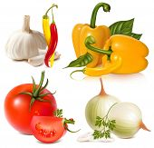 Vector set of vegetables: garlic, chili peppers, bell-peppers, tomatoes and onions
