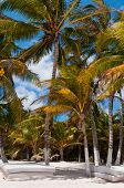 Beach Beds Under Palm Trees On Caribbean