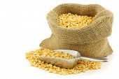 yellow split peas in a burlap bag with an aluminum scoop on a white background