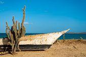 Cactus en una playa