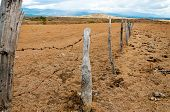 Old Fence Posts