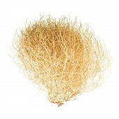 Tumbleweed Bush